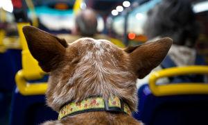 Основные правила перевозки собак в метрополитене и автобусе